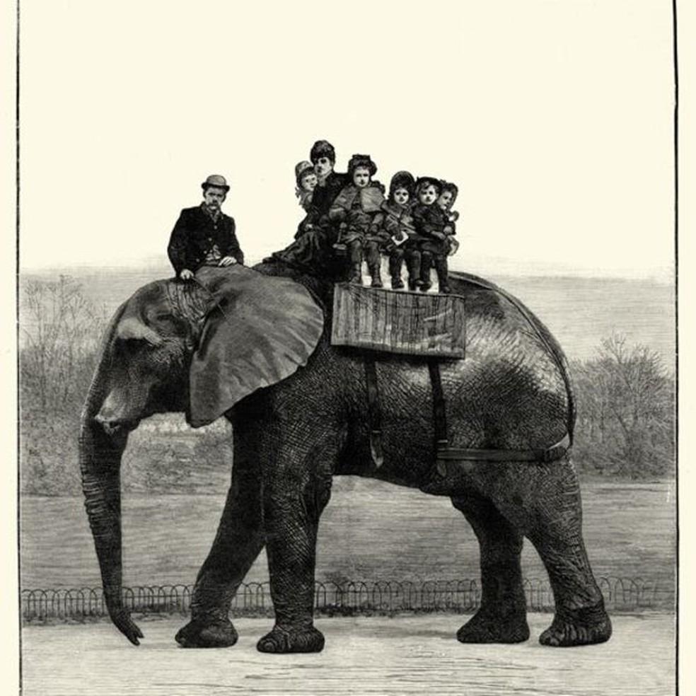 Jumbo era muito popular entre as crianças, incluindo os filhos da rainha Victoria  (Foto: Wiki Commons)