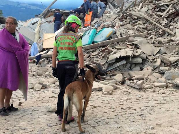 Equipe de resgate usa cão para procurar sobreviventes sob escombros em Amatrice (Foto: Emiliano Grillotti / Reuters)