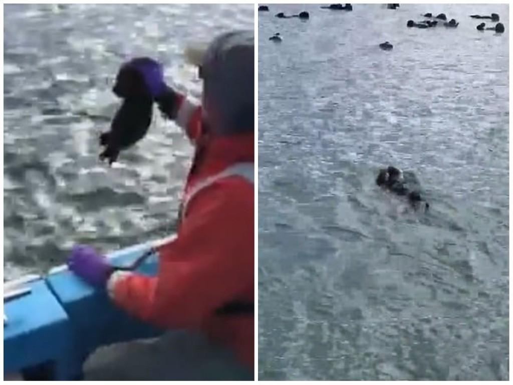 Pesquisador soltando filhote no mar (Foto: Reprodução Facebook)