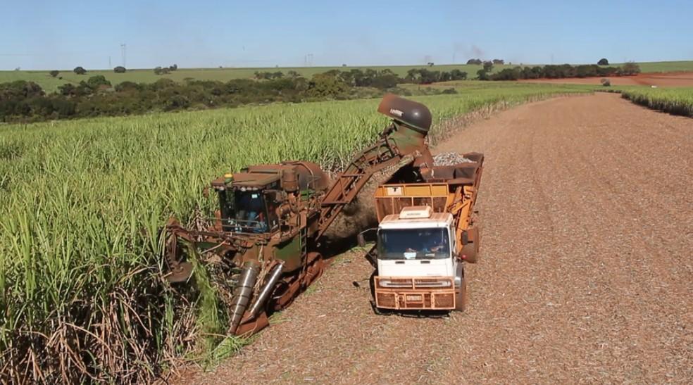 Colheita de cana-de-açúcar na região de Ribeirão Preto — Foto: EPTV/Reprodução