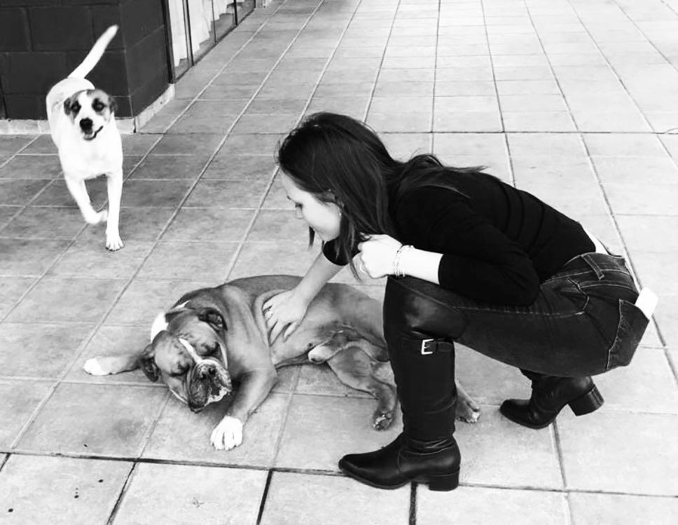 Larissa Manoela lamenta morte de um de seus cachorros (Foto: Reprodução / Instagram)