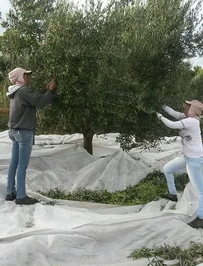 oliverias-orfeu-grupo-fazendas-sertaozinho (Foto: Divulgação/Orfeu)
