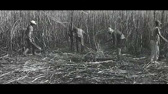 Alagoas celebra 200 anos de história que se mistura à da cana-de-açúcar