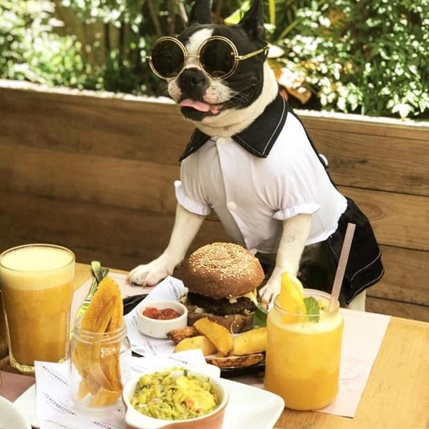 17 lugares pet friendly em São Paulo