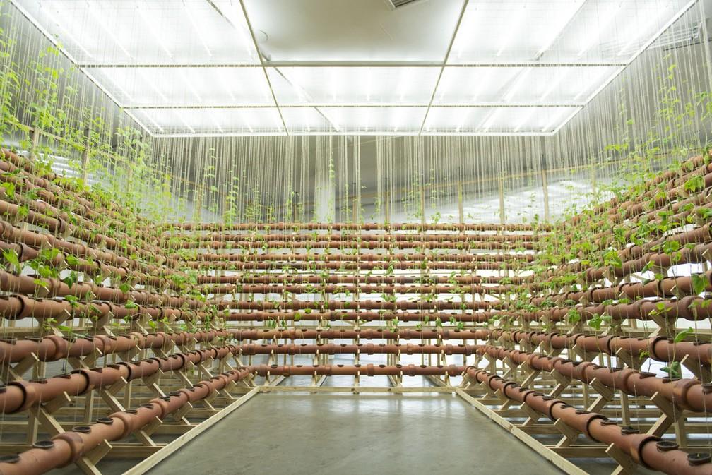 Vista da instalação 'Insurgências Botánicas: Phaseolus Lunatus', da artista Ximena Garrido-Lecca, na mostra 'Vento' da 34ª Bienal de São Paulo — Foto: Levi Fanan / Fundação Bienal de São Paulo