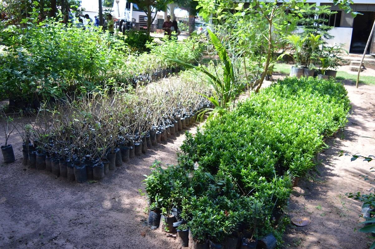 Horto Municipal fornece plantas para canteiros e praças de Natal