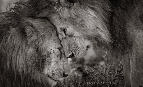 Reprodução/Facebook/David Lloyd Wildlife Photography