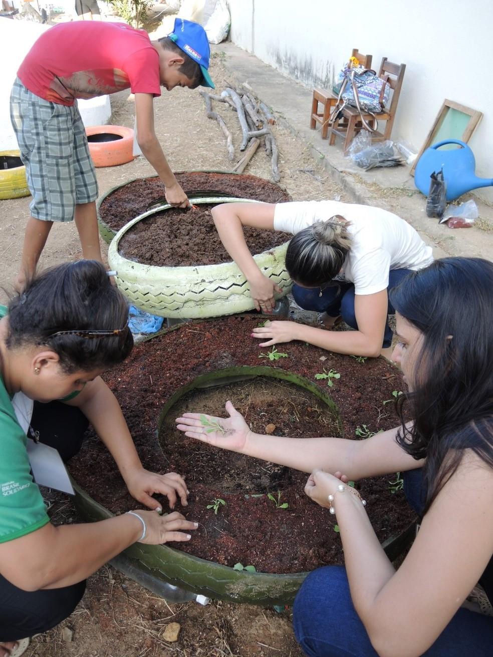 Técnicas de compostagem, horta e viveiro compõe a programação (Foto: Divulgação)
