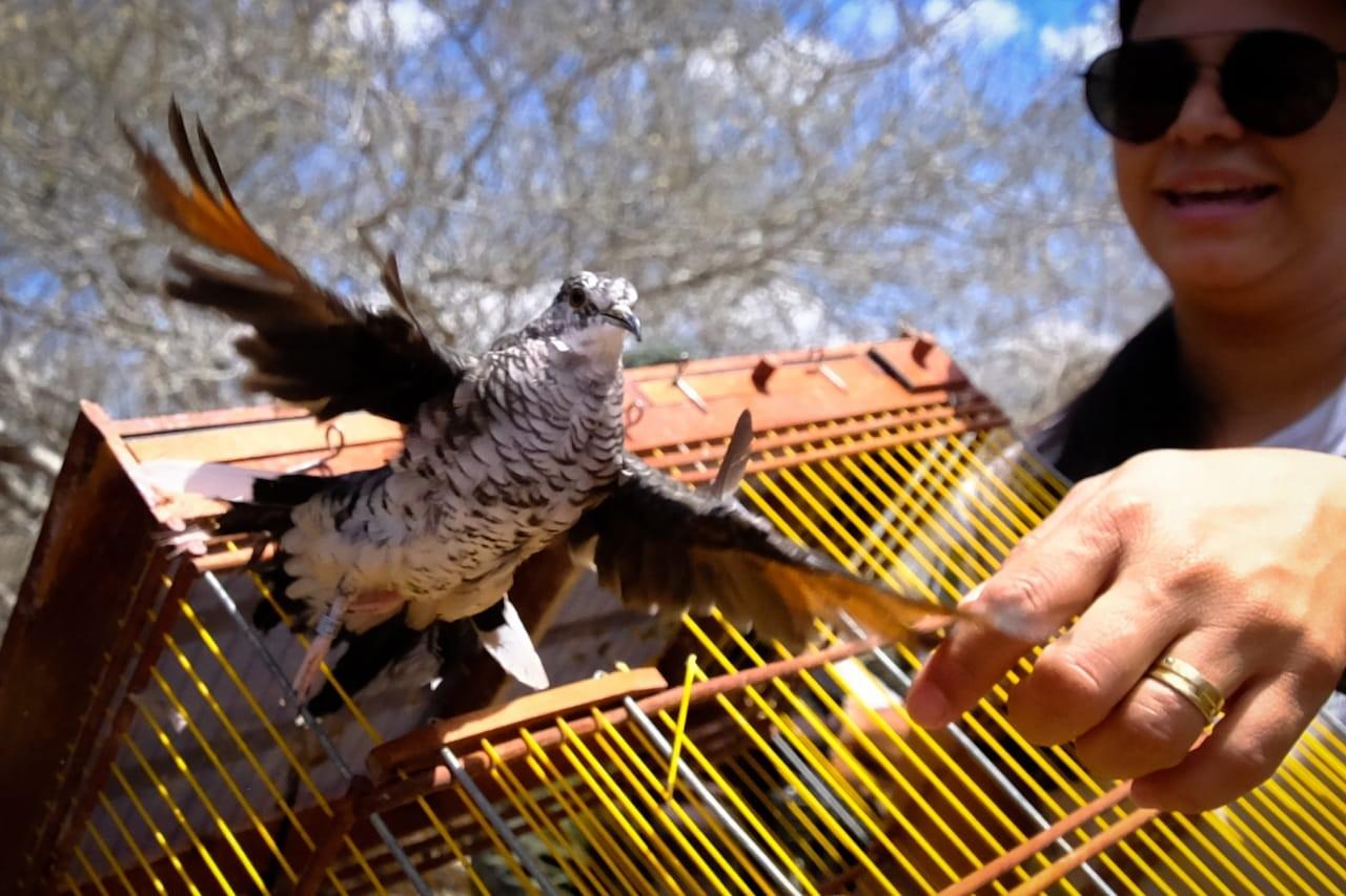 Mais de 100 animais silvestres apreendidos em fiscalização em Alagoas são devolvidos à natureza