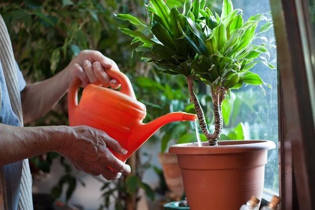 como-regar-plantas (Foto: ThinkStock)