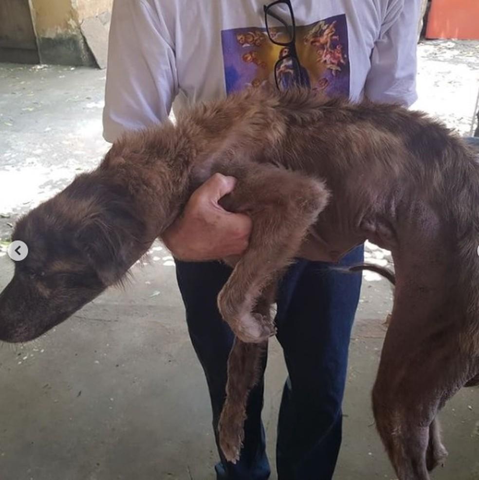 Cachorro resgatado em Teresina estava desnutrido — Foto: Divulgação/Polícia Civil