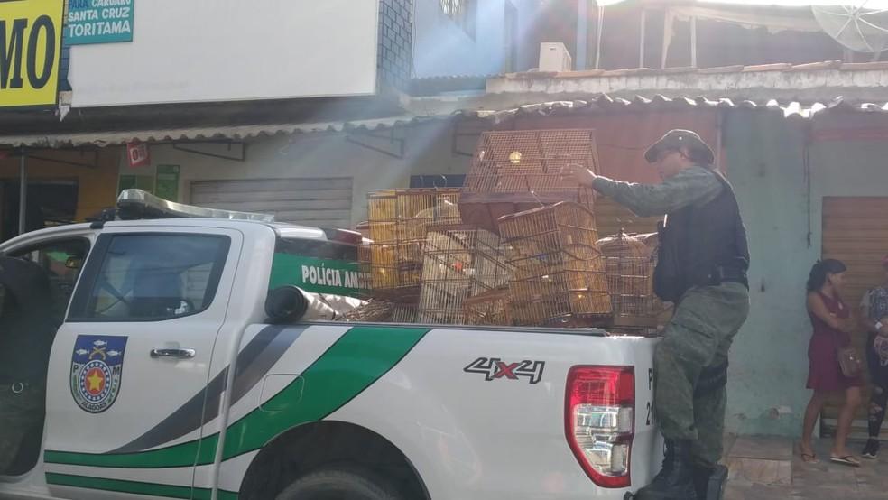 Militar recolhe gaiolas com aves no bairro do Jacintinho, em Maceió — Foto: BPA/Divulgação