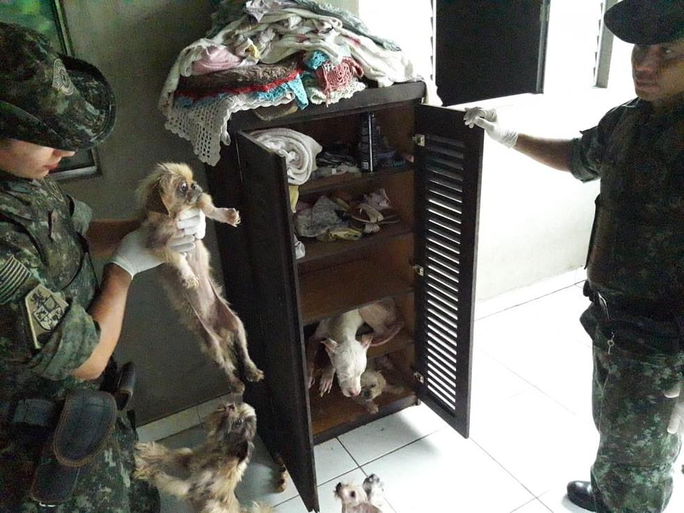 A Polícia Militar Ambiental encontrou 19 cachorros em situação de vulnerabilidade em imóvel de Cananéia, SP — Foto: Divulgação/Polícia Militar Ambiental