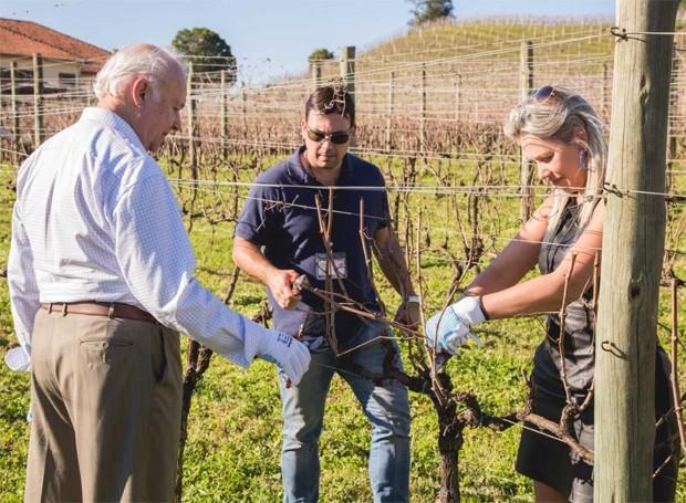 Dois módulos do curso contemplam a colheita em vinícolas (Foto: Divulgação)