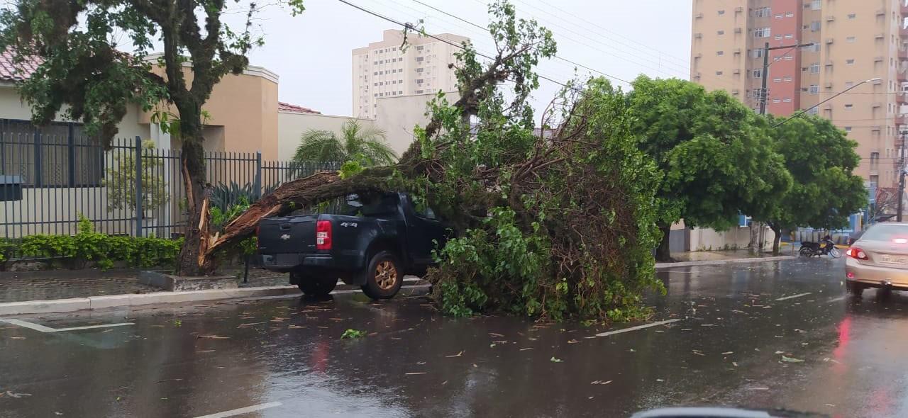 Forte chuva causa alagamento e quedas de árvores na região de Presidente Prudente