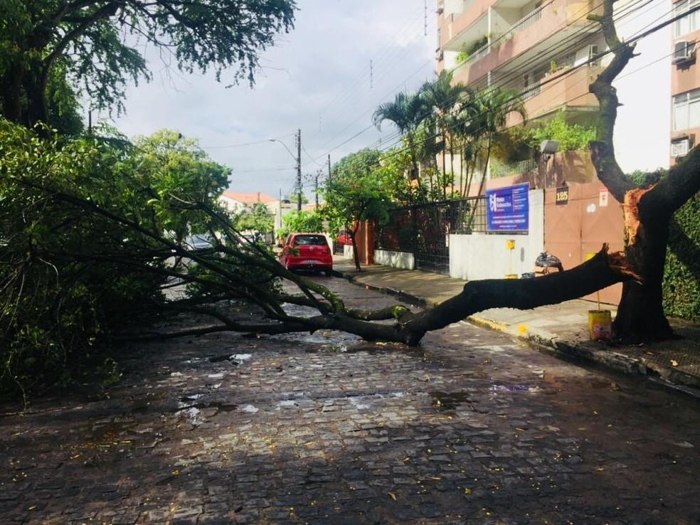 Árvore caída interdita rua em Casa Forte, na Zona Norte do Recife (Foto: Thiago Augustto/TV Globo)