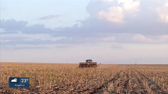 Um mês após fim do vazio da soja em MS, plantio começa a ganhar ritmo