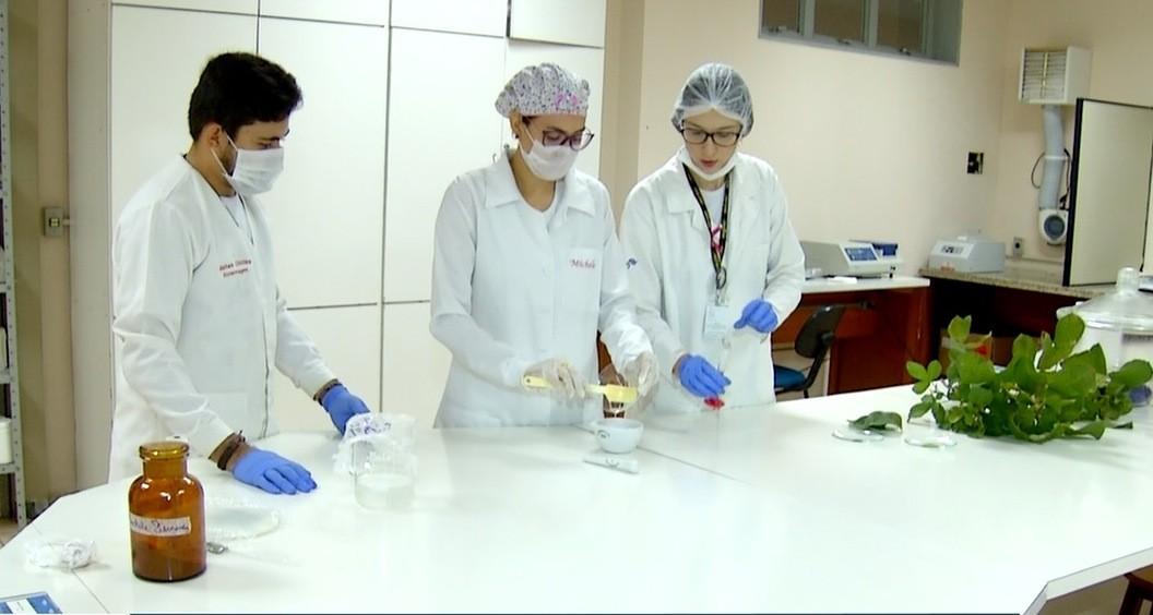 Pesquisadores de Palmas criam shampoo feito com folhas do pequi  - Radio Evangelho Gospel