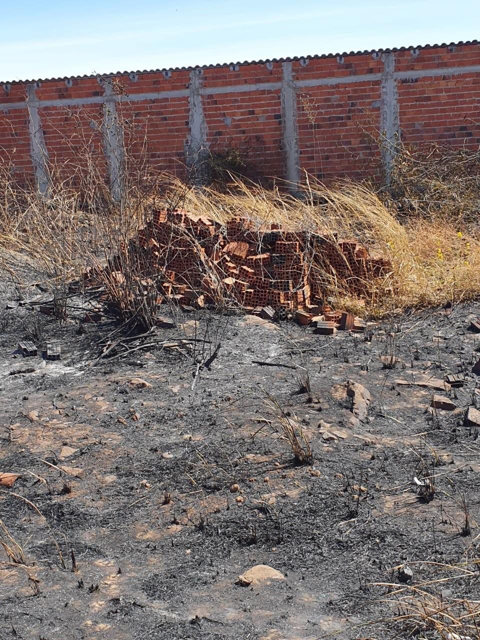 Filhotes de cachorro são resgatados de incêndio em Itaueira; polícia suspeita de maus-tratos