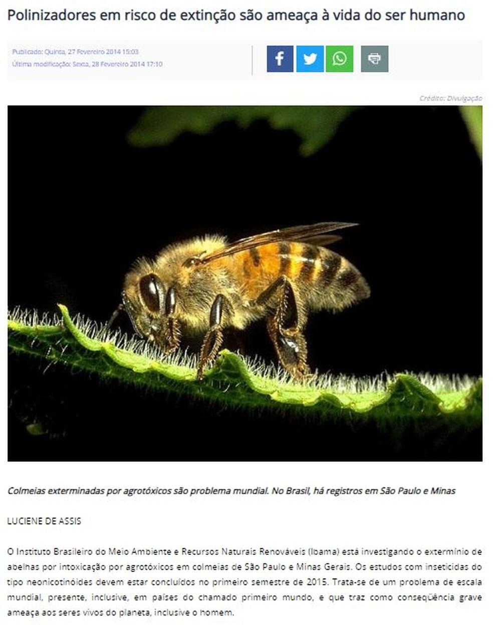Questão de geografia do Enem 2019 citou uma investigação do Ibama sobre o extermínio das abelhas por causa do uso de agrotóxicos — Foto: Reprodução/Ministério do Meio Ambiente