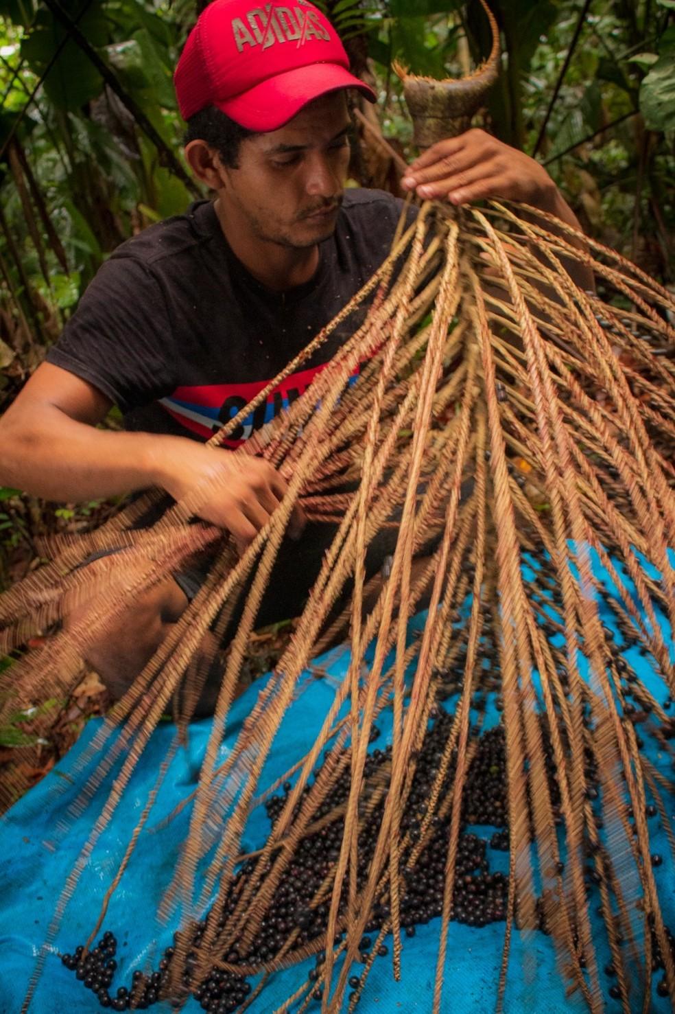 Documentário 'Açaí, Pérola Negra' foi gravado em Guajará-mirim, Rondônia — Foto: Joilson Arruda / arquivo pessoal