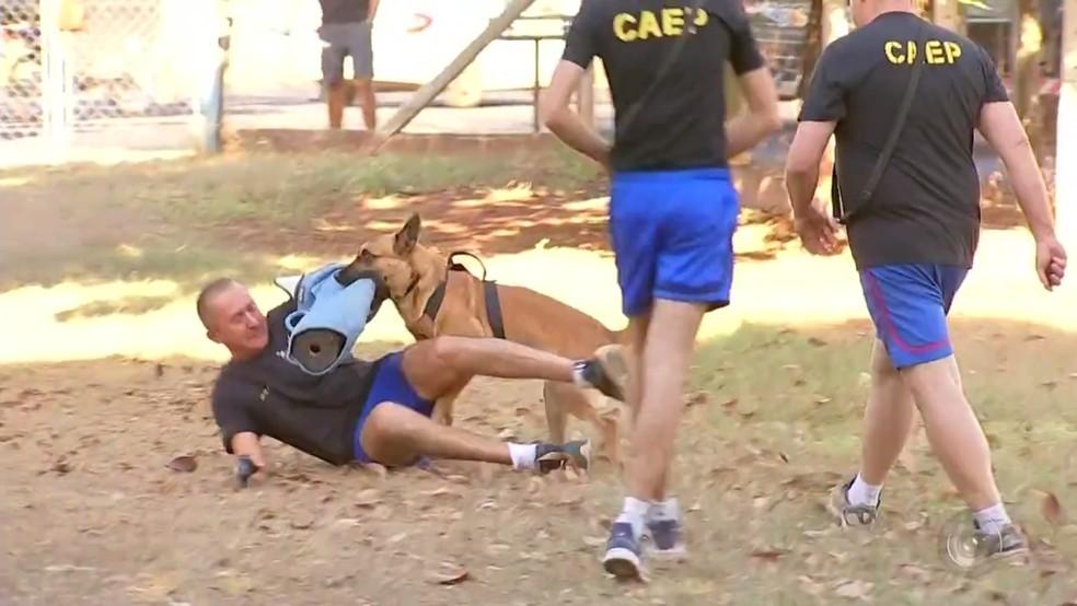 Cão da Polícia Militar de Rio Preto durante treinamento (Foto: Reprodução/TV TEM)