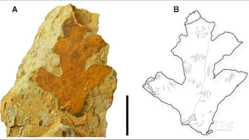 Outra pesquisa desenvolvida por Rafael encontrou um mapa que representa como seria o Planeta Terra há 110 milhões de anos. (Foto: Reprodução/TV Mirante)