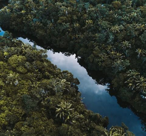 Por que os biomas brasileiros nunca estiveram tão ameaçados