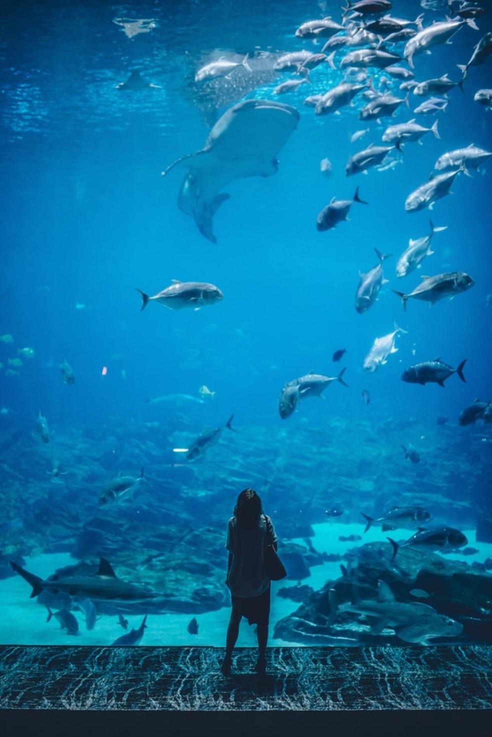 """Cientistas também compararam ambientes marinhos e de água doce, pois são """"estruturalmente muito distintos"""" — Foto:  Ian Schneider/Unsplash"""