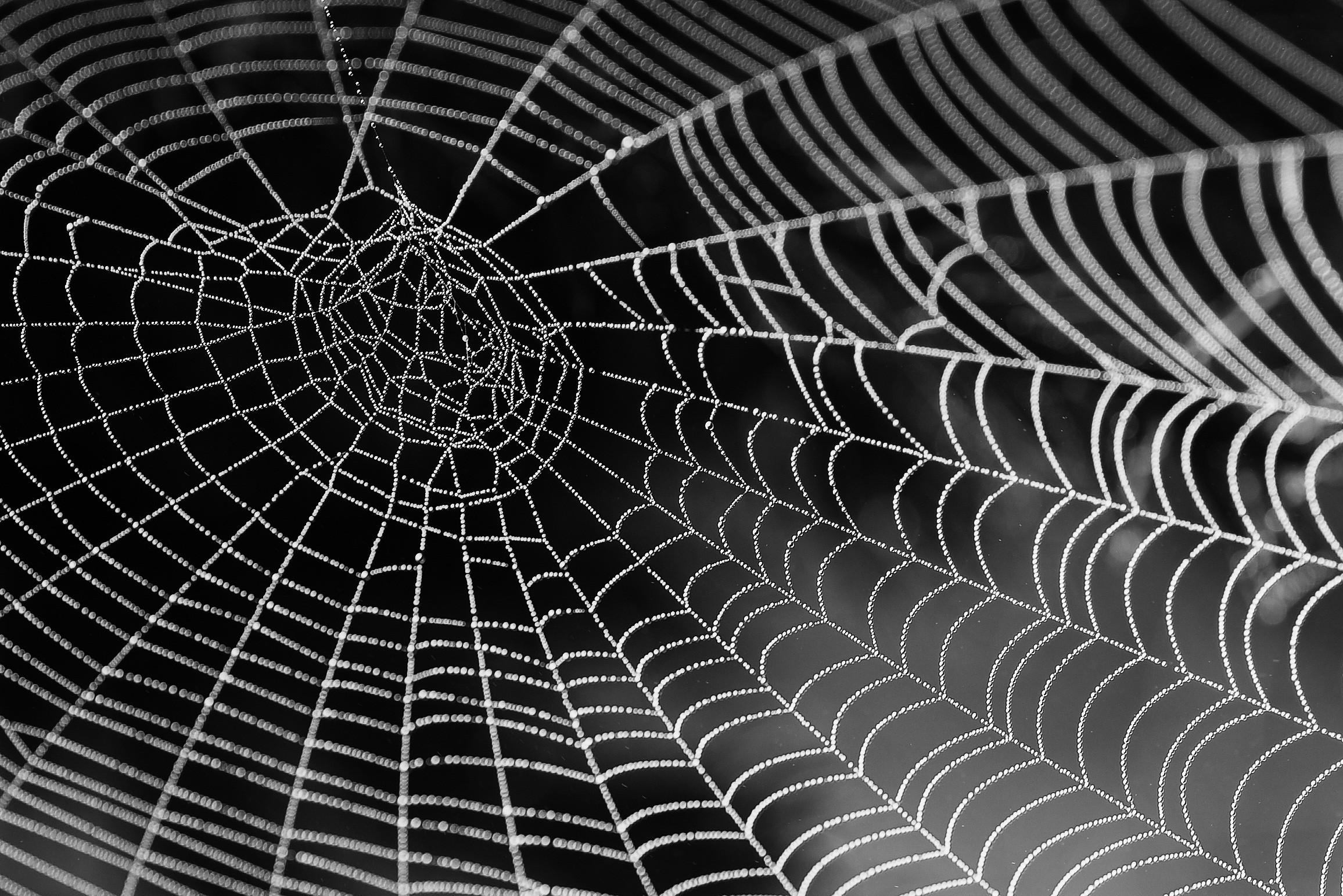 Teia de aranha é a fibra natural mais forte conhecida no mundo (Foto: Pxhere/Creative Commons)