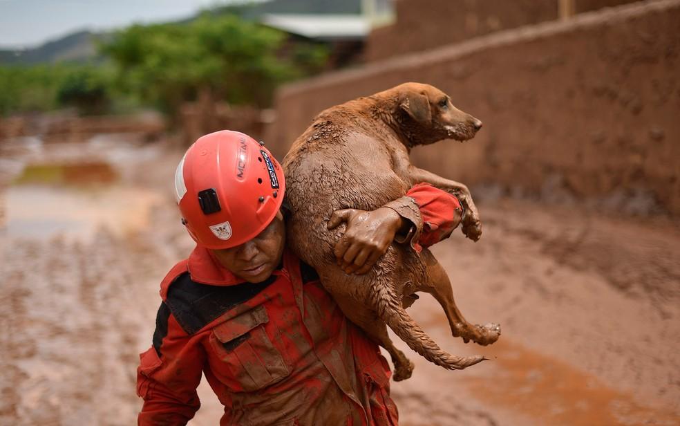 Bombeiro resgata um cachorro que estava preso na lama em Paracatu de Baixo, no interior de Minas Gerais. (Foto: Douglas Magno/AFP)