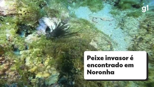 Peixe invasor é encontrado em Noronha