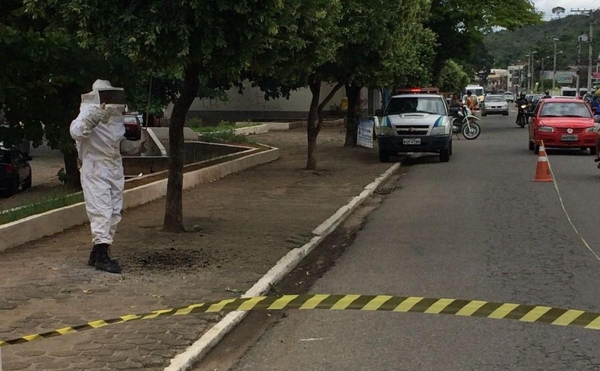 Guarda Ambiental remove ninho de marimbondos em Santo Antônio de Pádua, no RJ