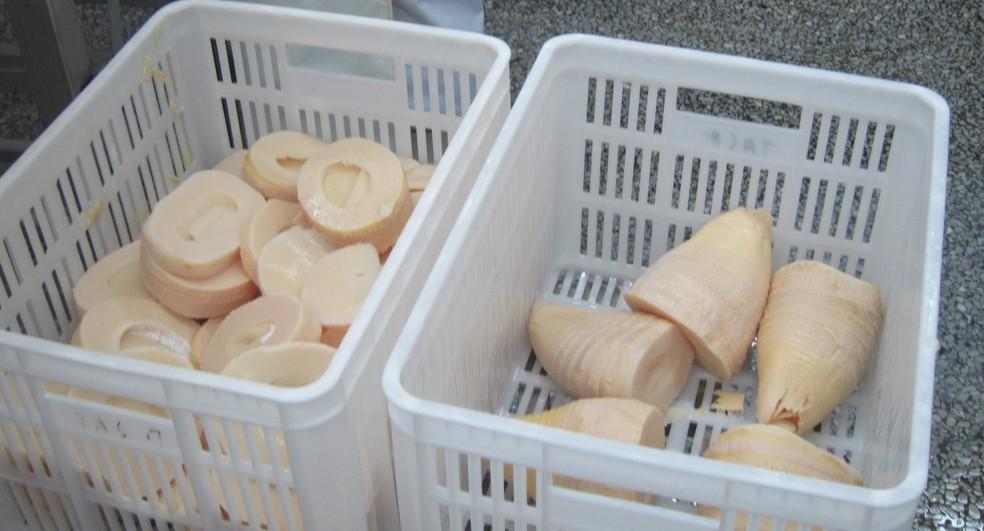 Broto de bambu: segundo Juliana Cortez, o alimento é semelhante a um palmito, só que crocante — Foto: Arquivo pessoal/Juliana Cortez