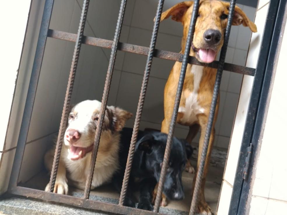 Animais começaram a ser enviados para lares temporários — Foto: Roberta Vaz/Arquivo Pessoal