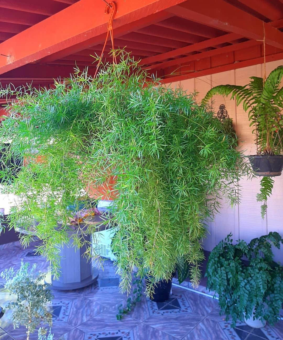 5 plantas ornamentais para cultivar no seu jardim (Foto: Reprodução / Instagram / @viviane.cristinasilva)