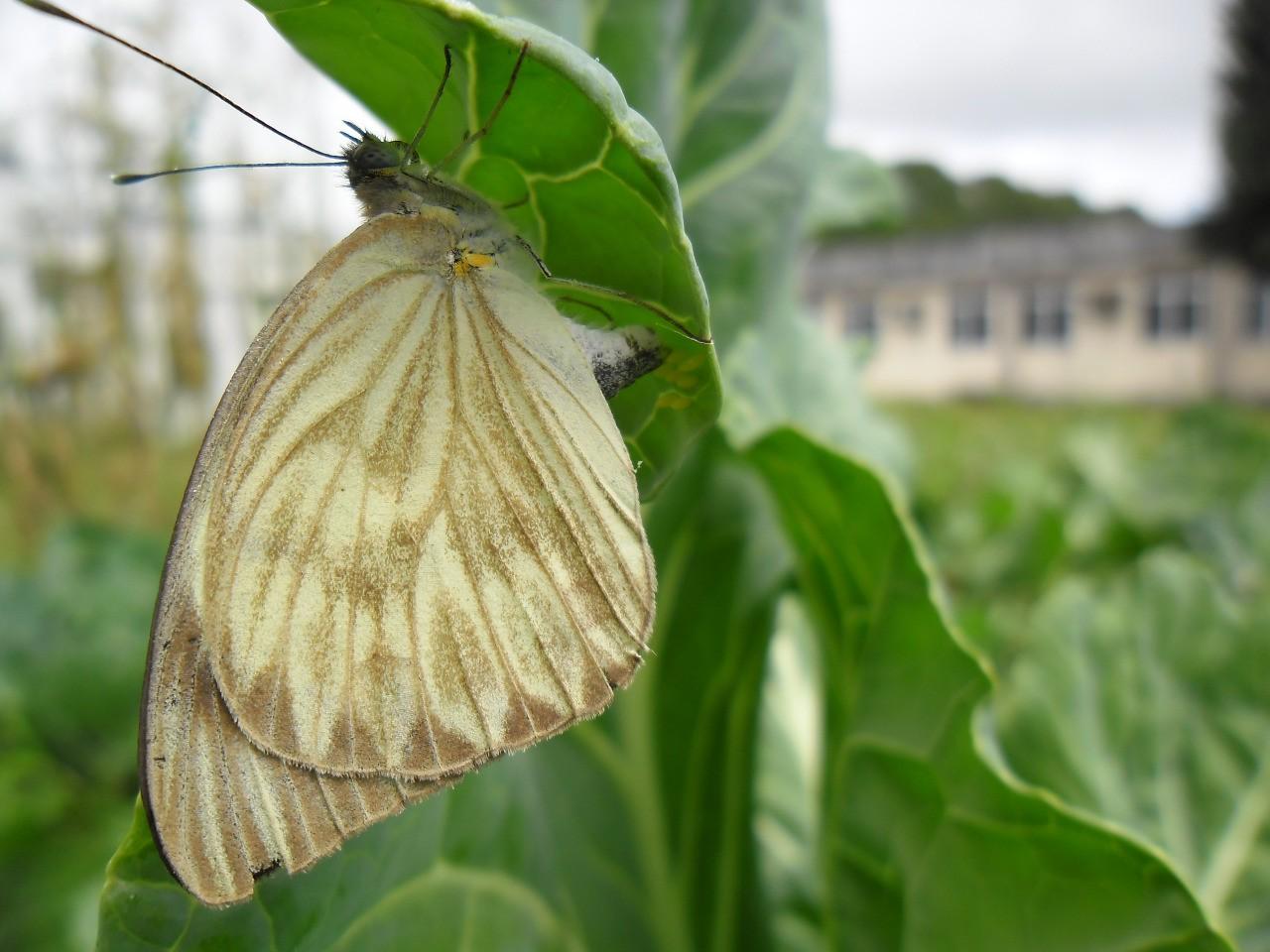 Especialistas explicam aumento da quantidade de borboletas em Maceió