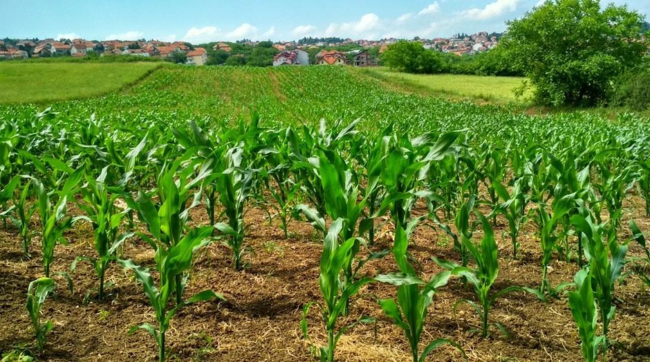agricultura, agronegócio (Foto: Pexels)
