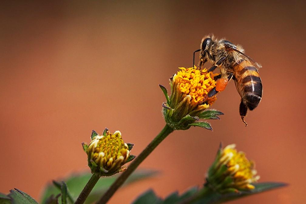 As abelhas também foram tema do Enem 2018, em uma questão sobre como as abelhas operárias sabem que é a rainha — Foto: Terra da Gente