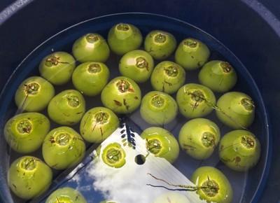coco-verde-revestimento-embrapa (Foto: Embrapa / Divulgação)