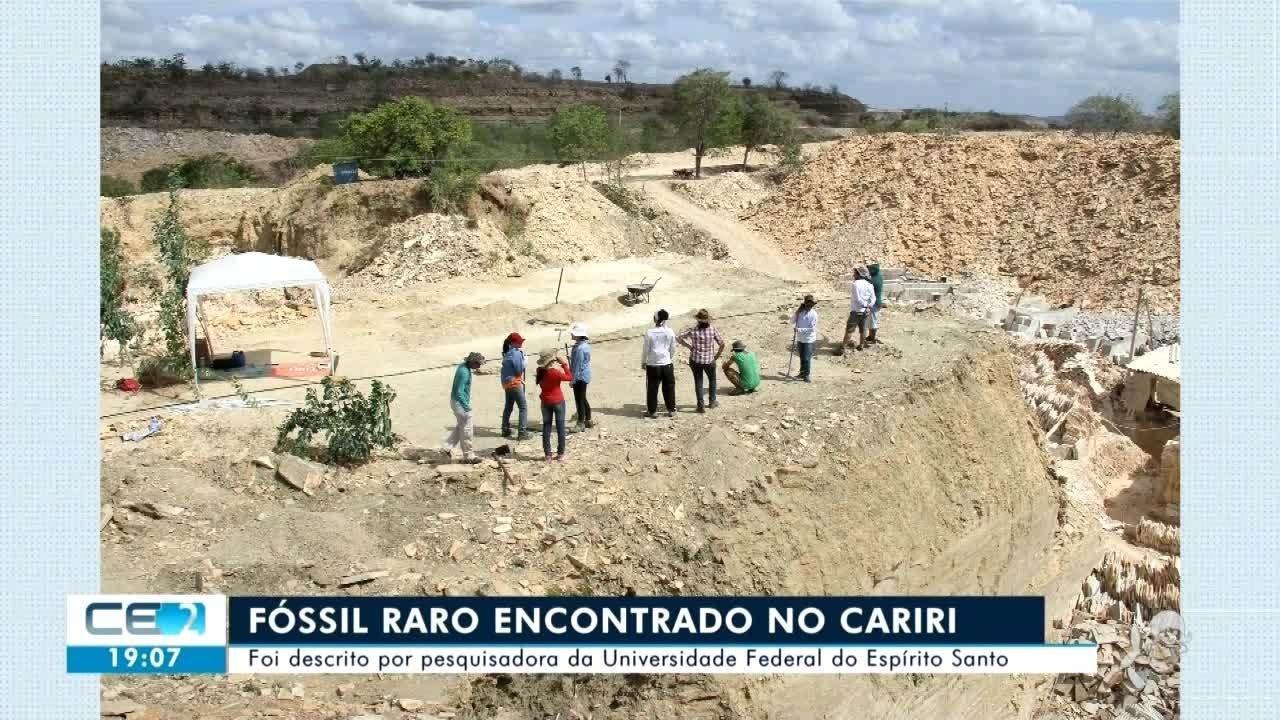 Fóssil raro é encontrado no Cariri