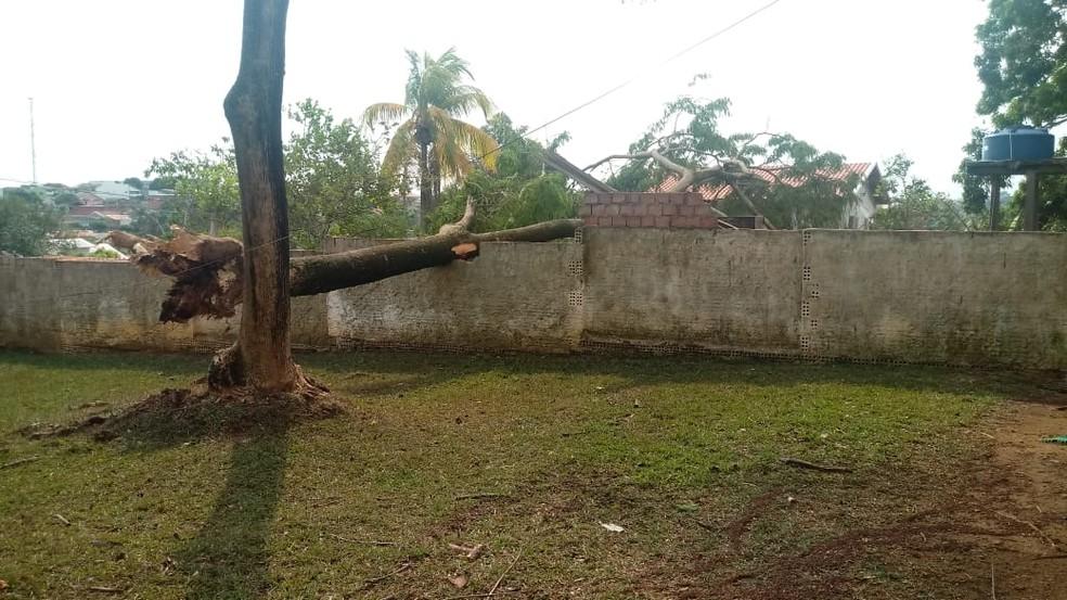 Árvore caiu sobre muro em Jaru (Foto: WhatsApp/Reprodução)