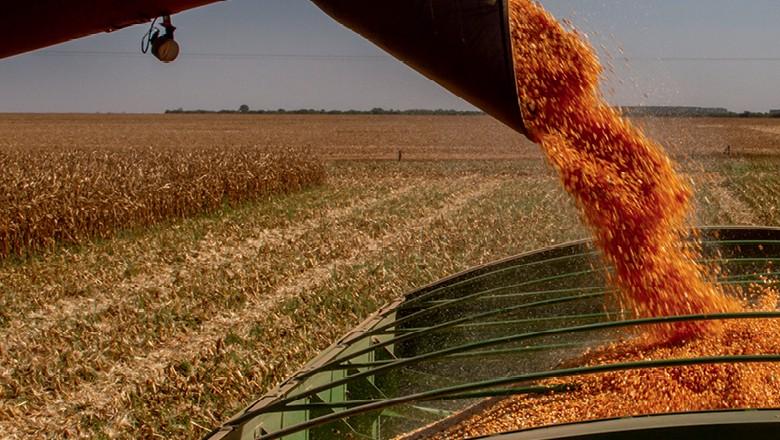 Exportação maior, produção animal e etanol fortalecem cenário para o milho brasileiro (Foto:  )