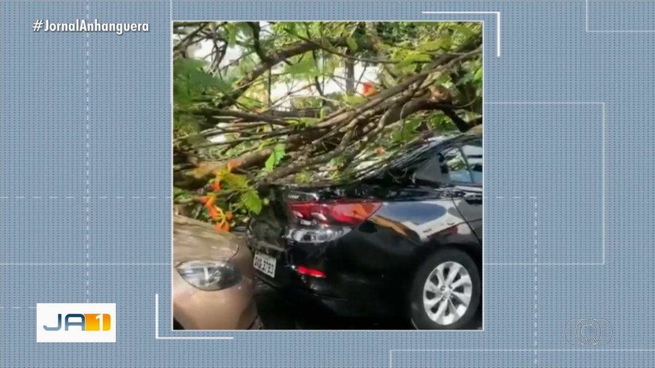 Árvore cai e danifica dois carros que estavam estacionados em rua de Goiânia