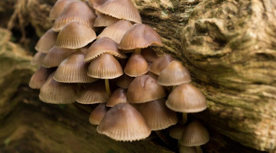 cogumelos, floresta, arvore (Foto: Reprodução/Pexels)