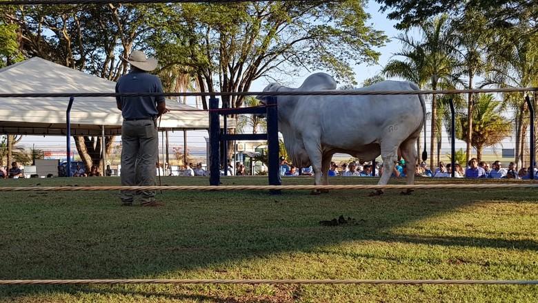 desfile-touros-ABS-Uberaba   (Foto: Divulgação)