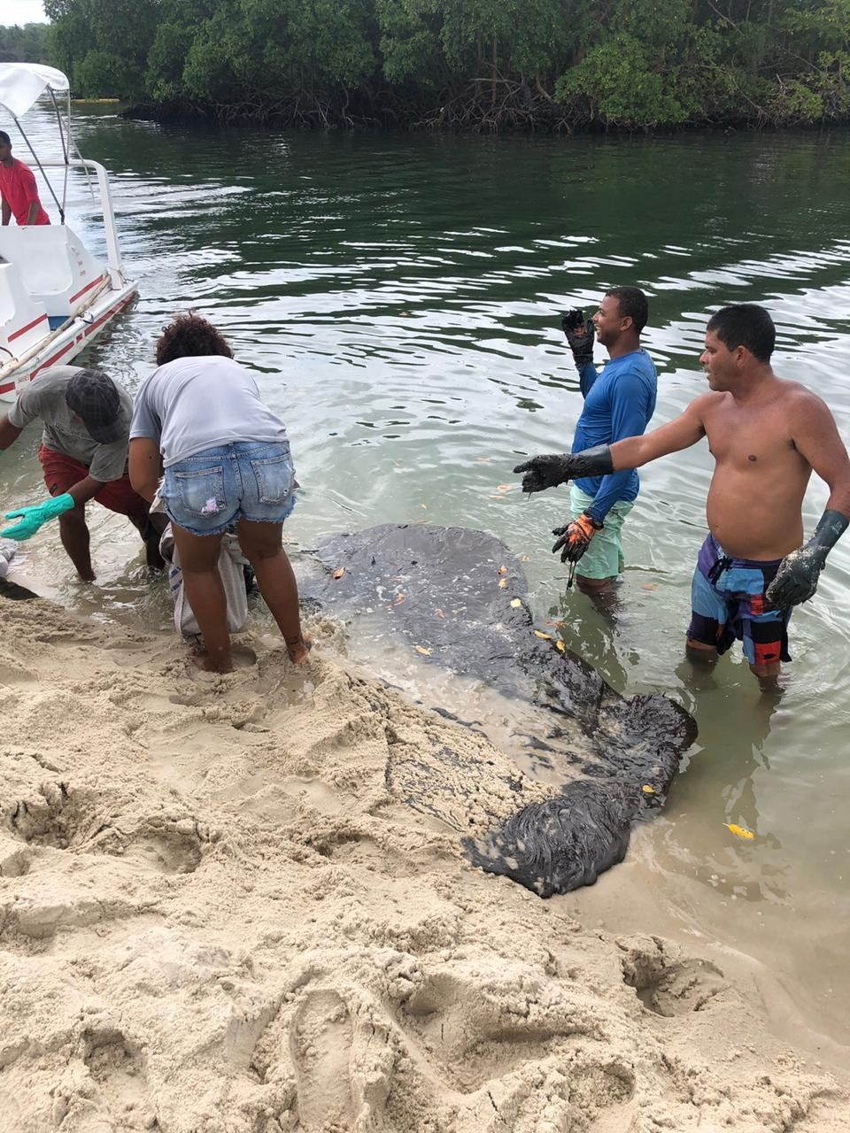 Óleo atinge praia e manguezal em Suape, no Cabo de Santo Agostinho - Notícias - Plantão Diário