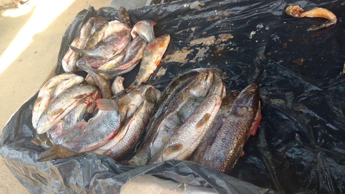Peixes capturados de forma irregular são apreendidos em feira de Itaperuna, no RJ