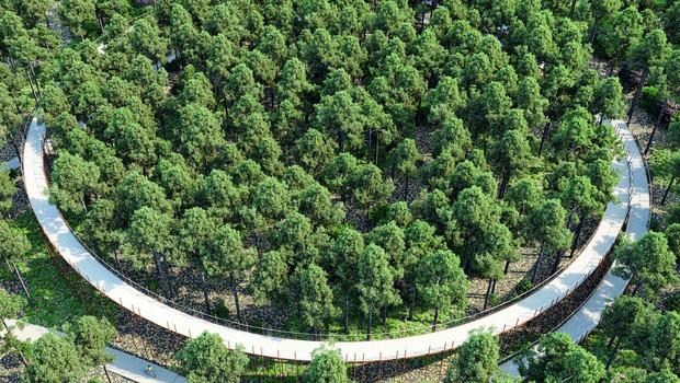 Ciclovia elevada atravessa floresta belga (Foto: Reprodução/Bycs.org)