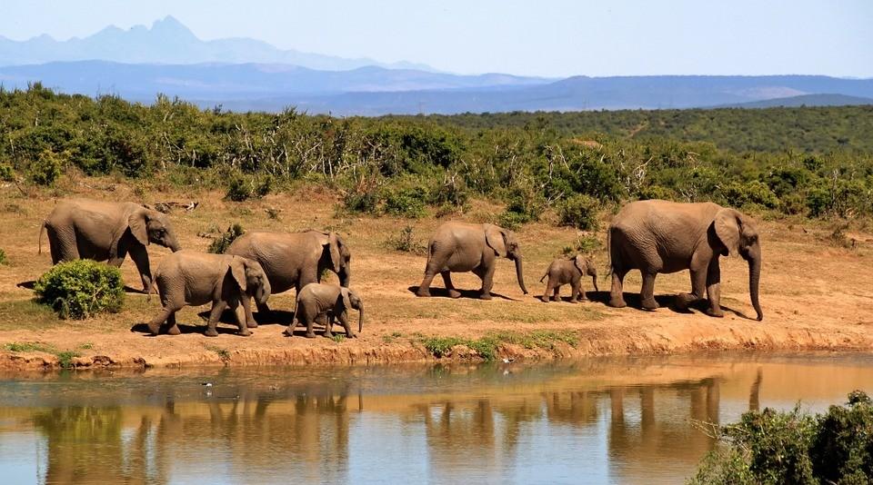 elefantes (Foto: Pixabay)